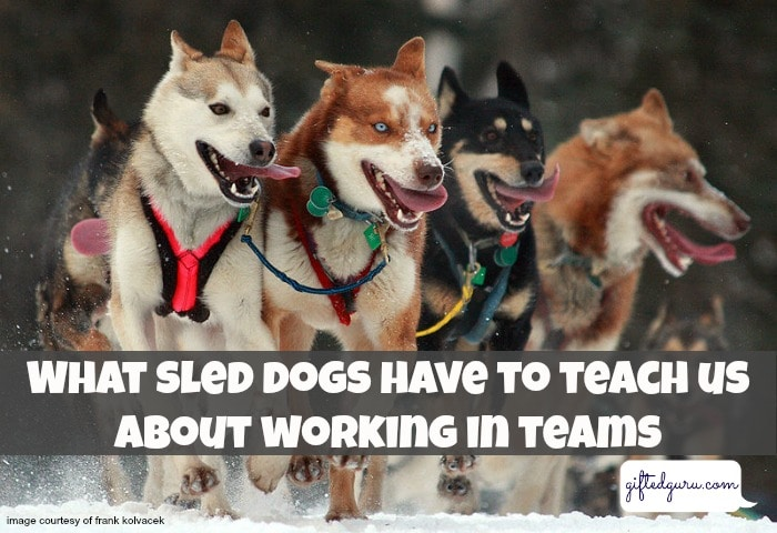 what-sled-dogs-have-to-teach-us-about-working-in-teams