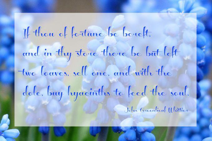 Hyacinth to feed the soul - Gifted Guru