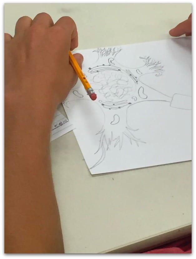 drawing-a-neuron