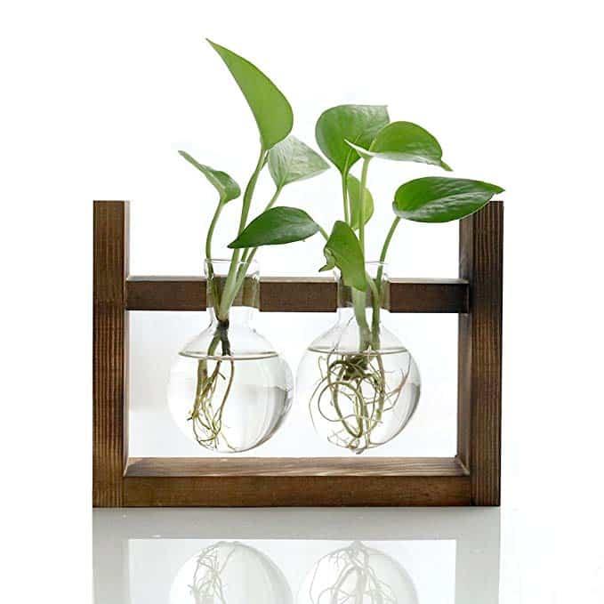 image of plant propogation station